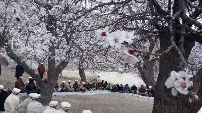 Senior citizens celebrate apricot blossom in Gojal