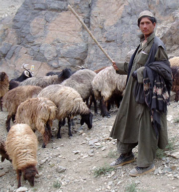 The Person Who Envied a Shepherd