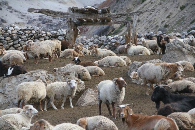 Pasture  (7)