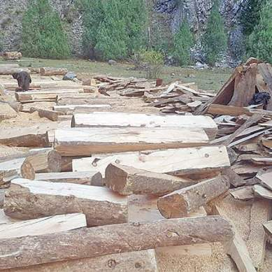 Deforestation threatens Gilgit-Baltistan's future: 10 million saplings to be planted next year