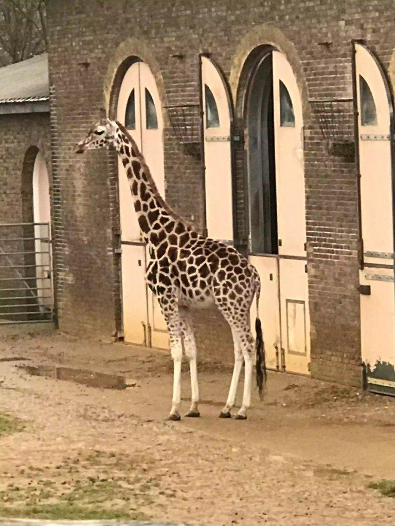 London Calling-London Zoo and Sunday Roast