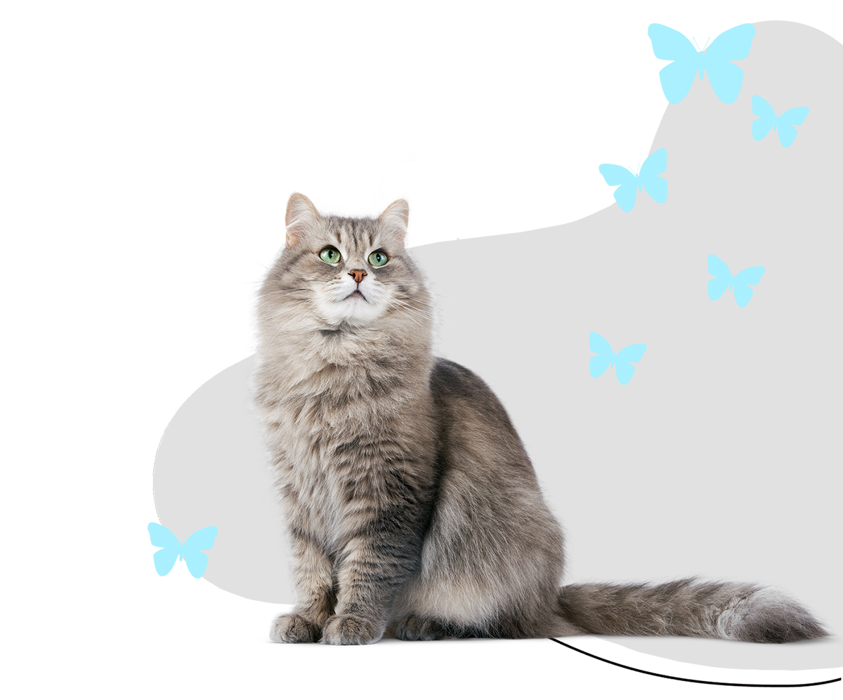 https://i0.wp.com/pamperedpawssd.com/wp-content/uploads/2020/07/services-kitty-butterfly-mobile-banner.jpg?fit=1200%2C997&ssl=1