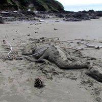 Cape Perpetua Sand Dragon
