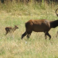 Summer Wildlife on the Alsea River