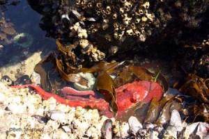 octopus Salt Creek County Park