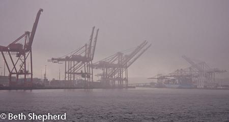 Giraffe cranes in the Seattle mist