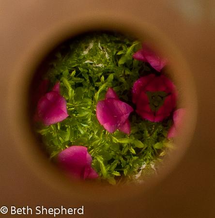 looking through the garden kaleidoscope-pink