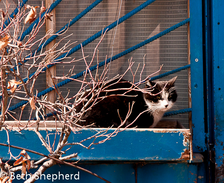 Gyumri cat in blue window, Armenia