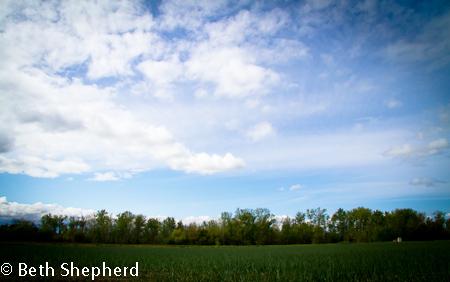 Walla Walla blue sky and field of onions