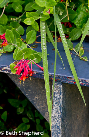 Raindrops on leaves by red flowers and blue bench