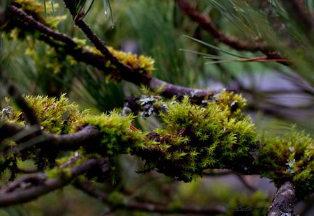 Moss at Kubota Garden