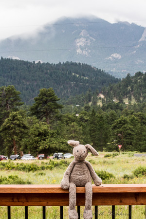 Bunny in the Rockies