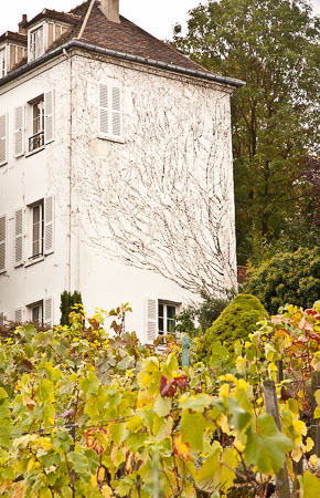 Paris Clos Montmartre vineyard