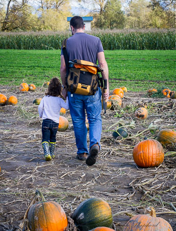Dad and daughter hunt for pumpkins