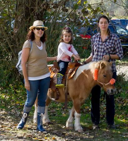 Ponies at Jubilee Farm