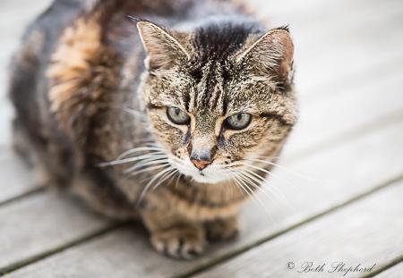 Maggie on deck