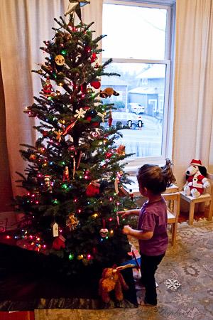 Christmas tree hunting 2013 tree
