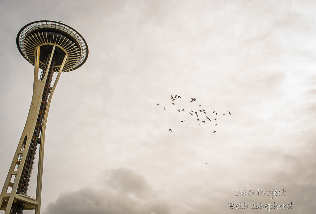 Space Needle and birds