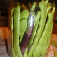 Probiotic Lacto-fermented Fresh Green Beans