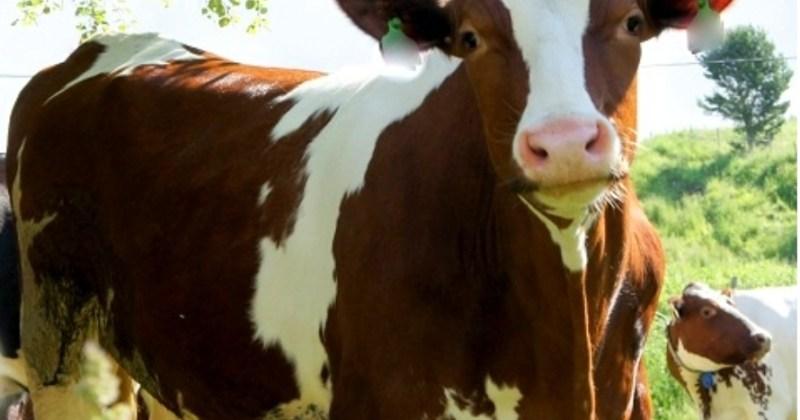 Er norsk kjøtt bærekraftig