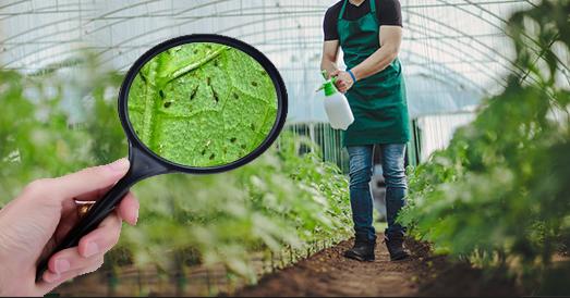 حماية النباتات من الحشرات بدون مبيدات
