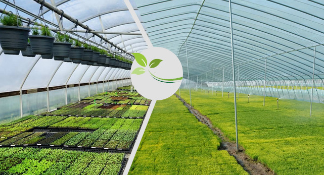أهمية الزراعة في البيوت المحمية