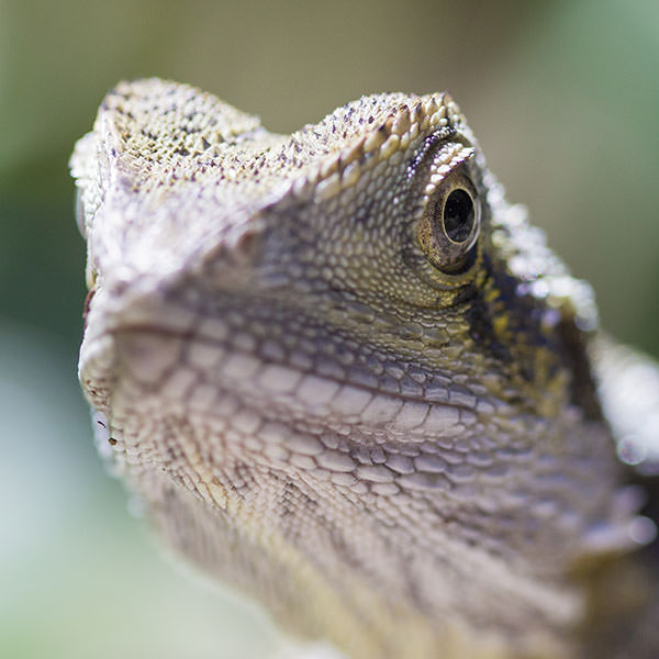 There were a lot of lizards, luckily I haven't uploaded all the lizard photos I took, otherwise we'd be here a while.