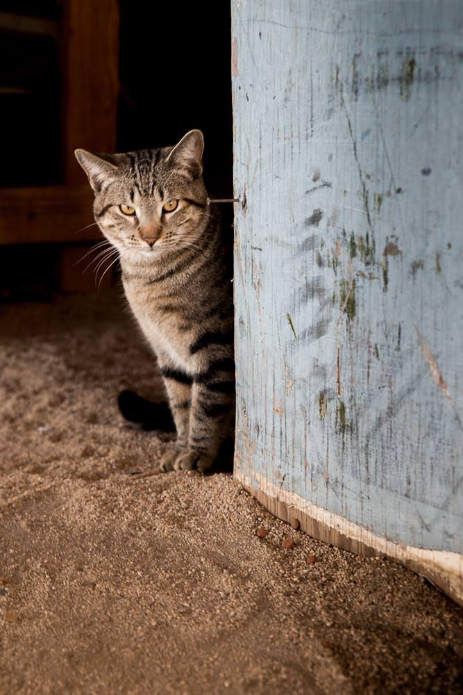Coco's cat, Coco's Corner, Baja California