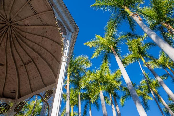 Palm trees in the central plaza—feels like summer.