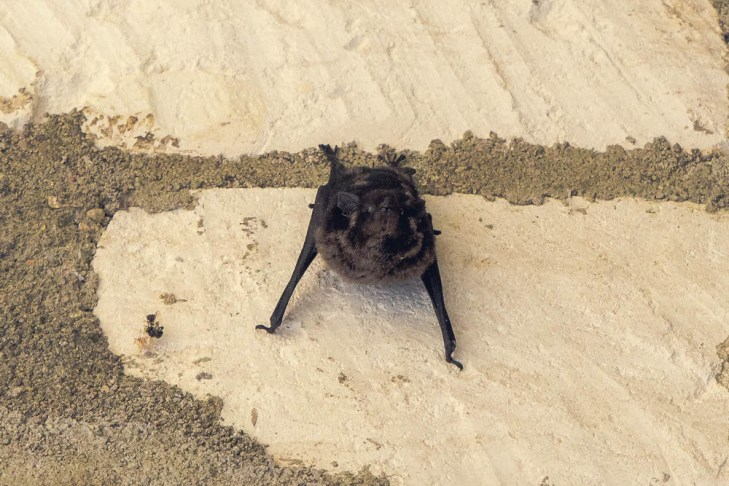 All the dark corners of these ruins seem to house families of adorable little bats.