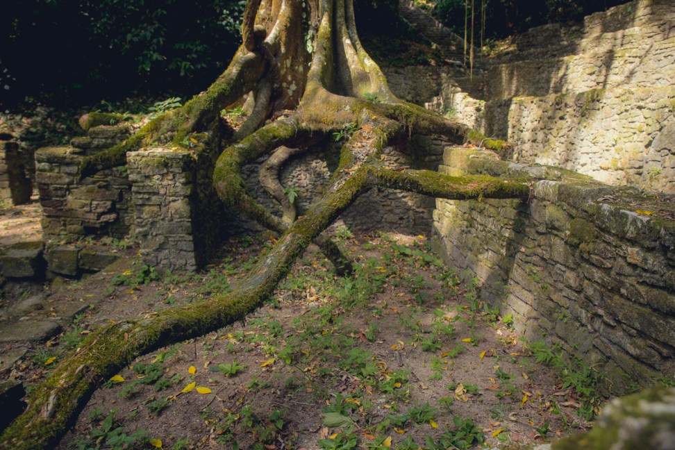 Levitating tree.