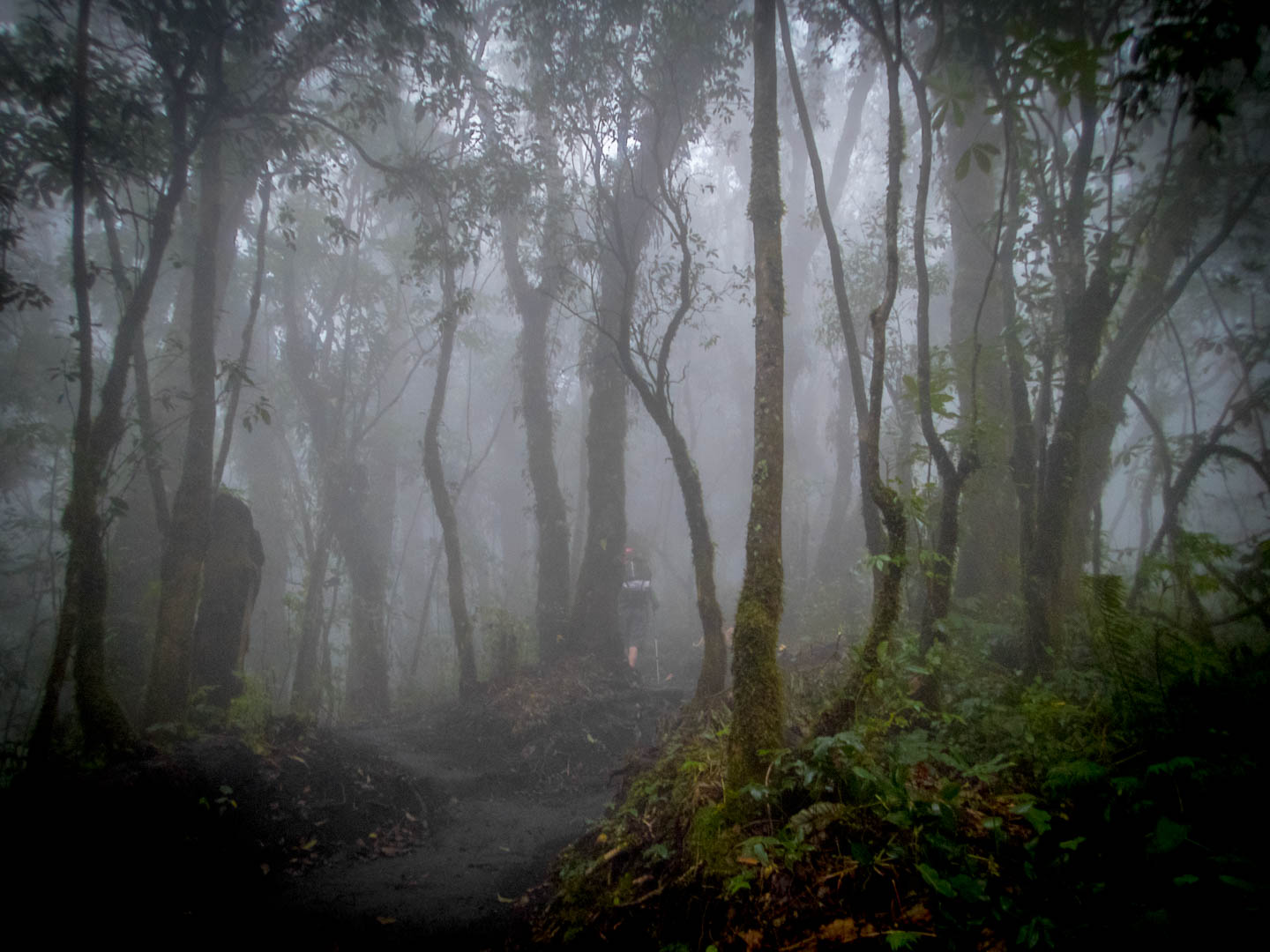 The mysterious forest