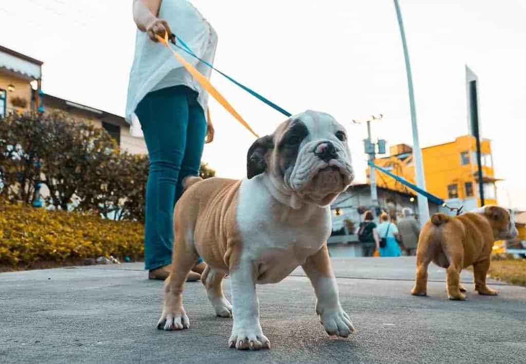 Las mascotas son bienvenidas, póngase en contacto antes de la estancia para ver si aplican cargos adicionales