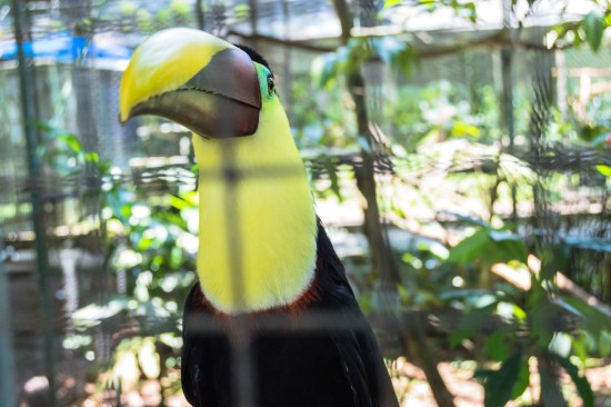 The toucan was also beautiful.