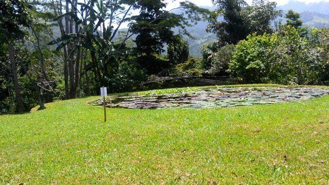 pond at carla black's