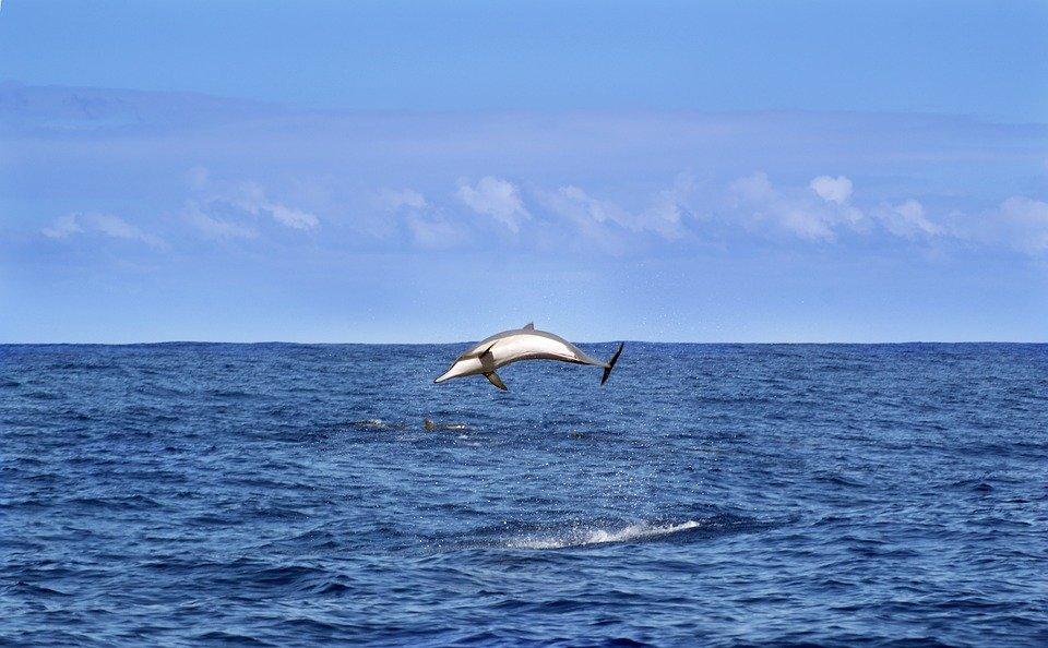 39.dolphin