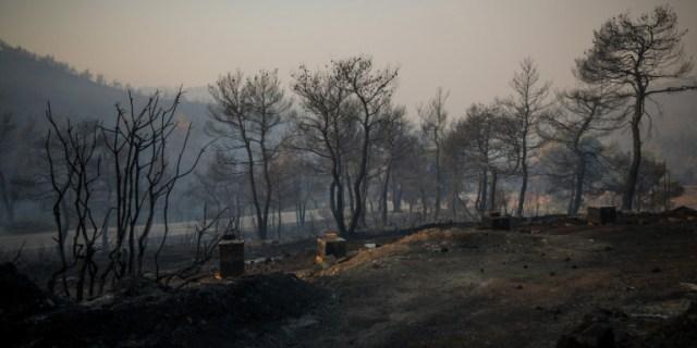 Κρανίου τόπος στην Εύβοια: Οι πρώτες φωτογραφίες από τα καμένα | panathinaikos24.gr