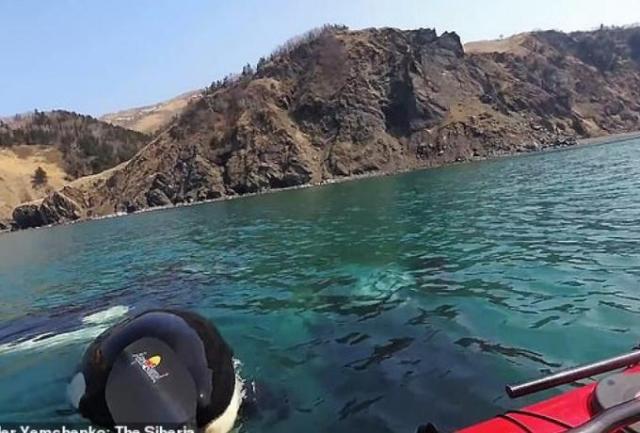 Ρωσία: Η στιγμή που φάλαινες δολοφόνοι περικυκλώνουν ένα καγιάκ (τρομακτικό βίντεο) | panathinaikos24.gr