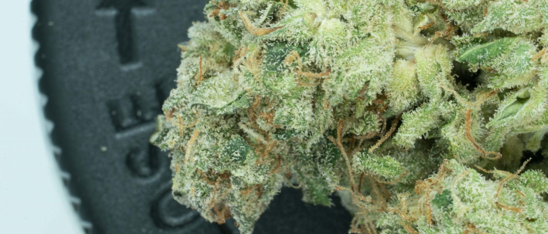 Pure Kush by Squid Pants
