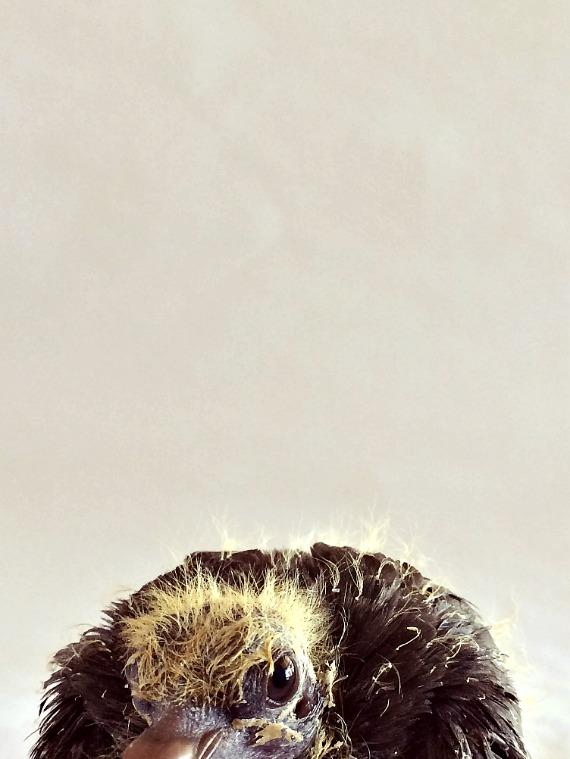 Snickers Fuzzy Head