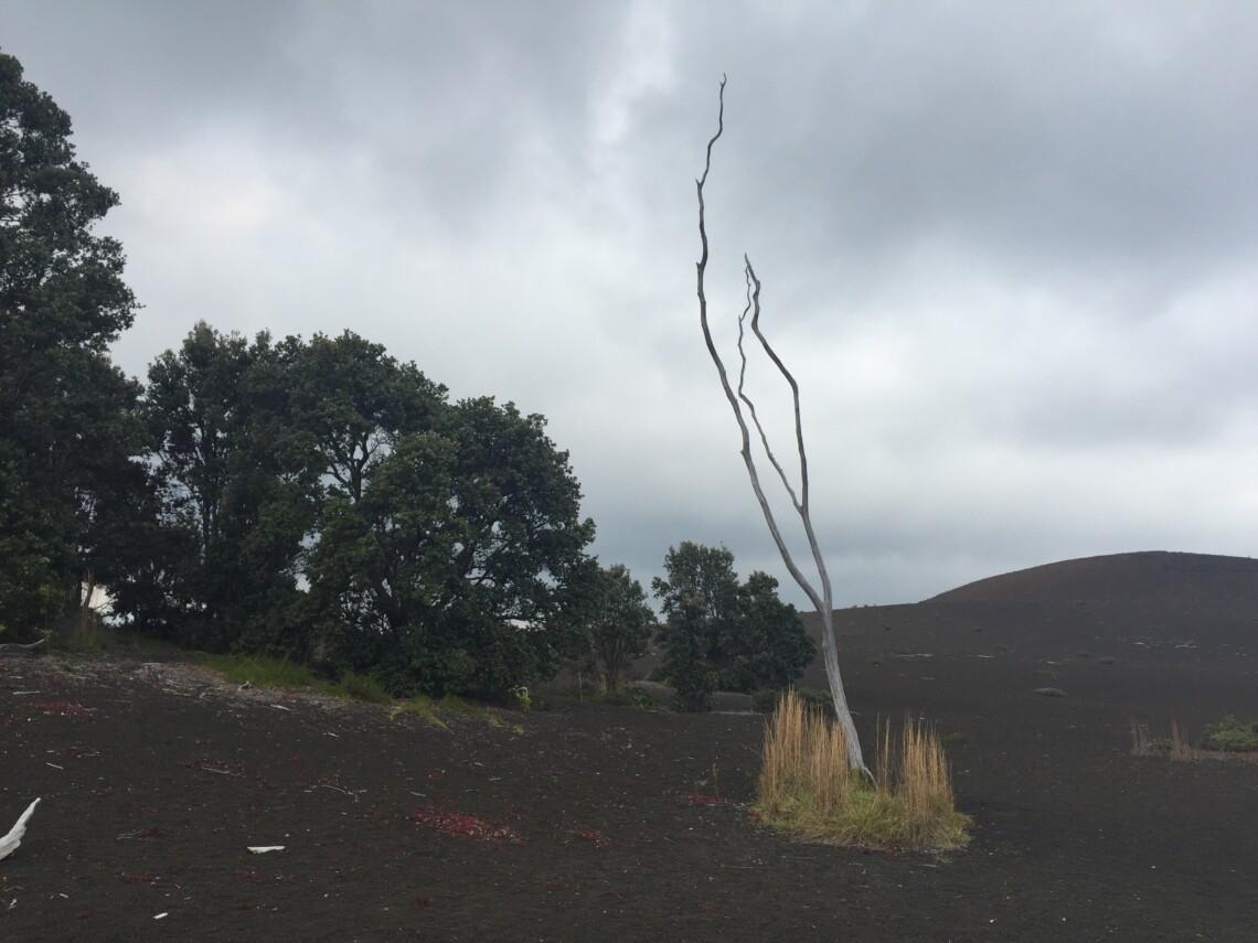 dead tree, live trees