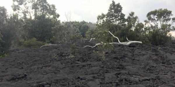 Devastation Trail