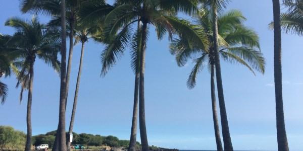 Palm trees on black sand beach
