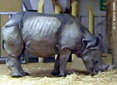 Jange, der Staubsauger, 21. März 2009