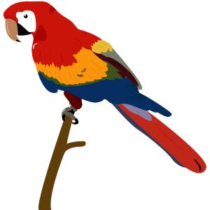 Guacamaya roja - Ilustración en vectores