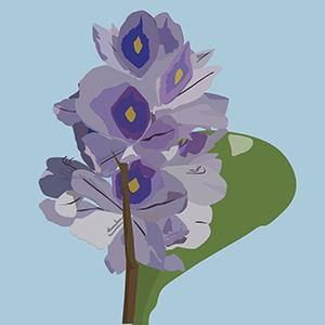 Flor de ninfa