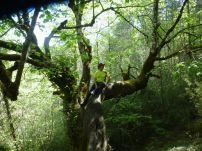 Duende en árbol (Miguel)
