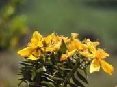 Wild flowers on the trek route