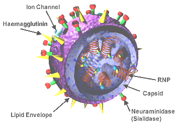 basic virus diagram creative color wheel ideas viruses and prions model of an influenza image credit nih
