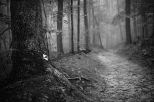 20140915-153438-©DuaneLPandorf-L1031165